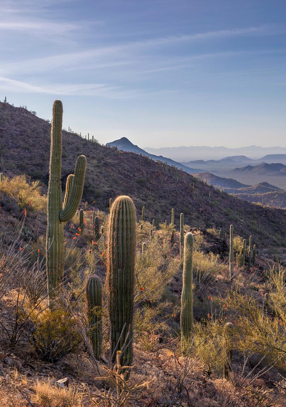 Saguaro National Park (west), Tucson, AZ